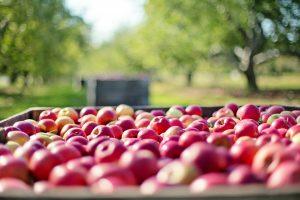 appels knieartrose