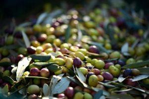 gezonde voeding olijfolie