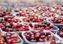 Kies voor gezond eten met zomergroente en -fruit